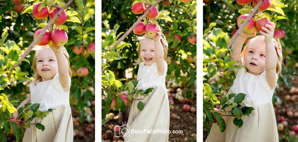 Apple Orchard Photos 2 year old Frederick MD
