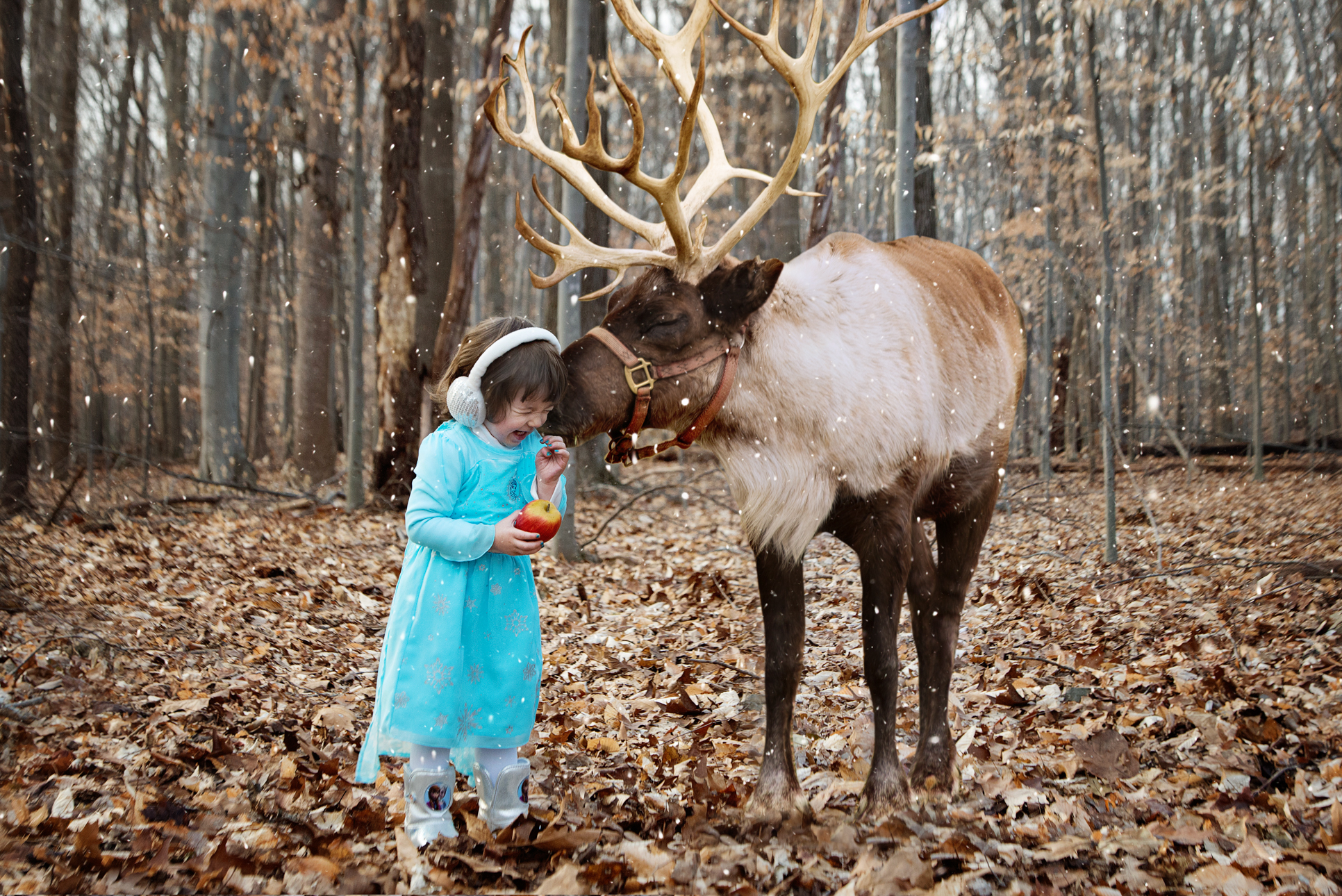 Reindeer Christmas Mini Sessions Frederick Md Children S