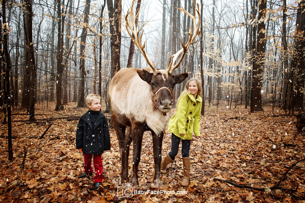 Reindeer Mini Sessions Frederick MD