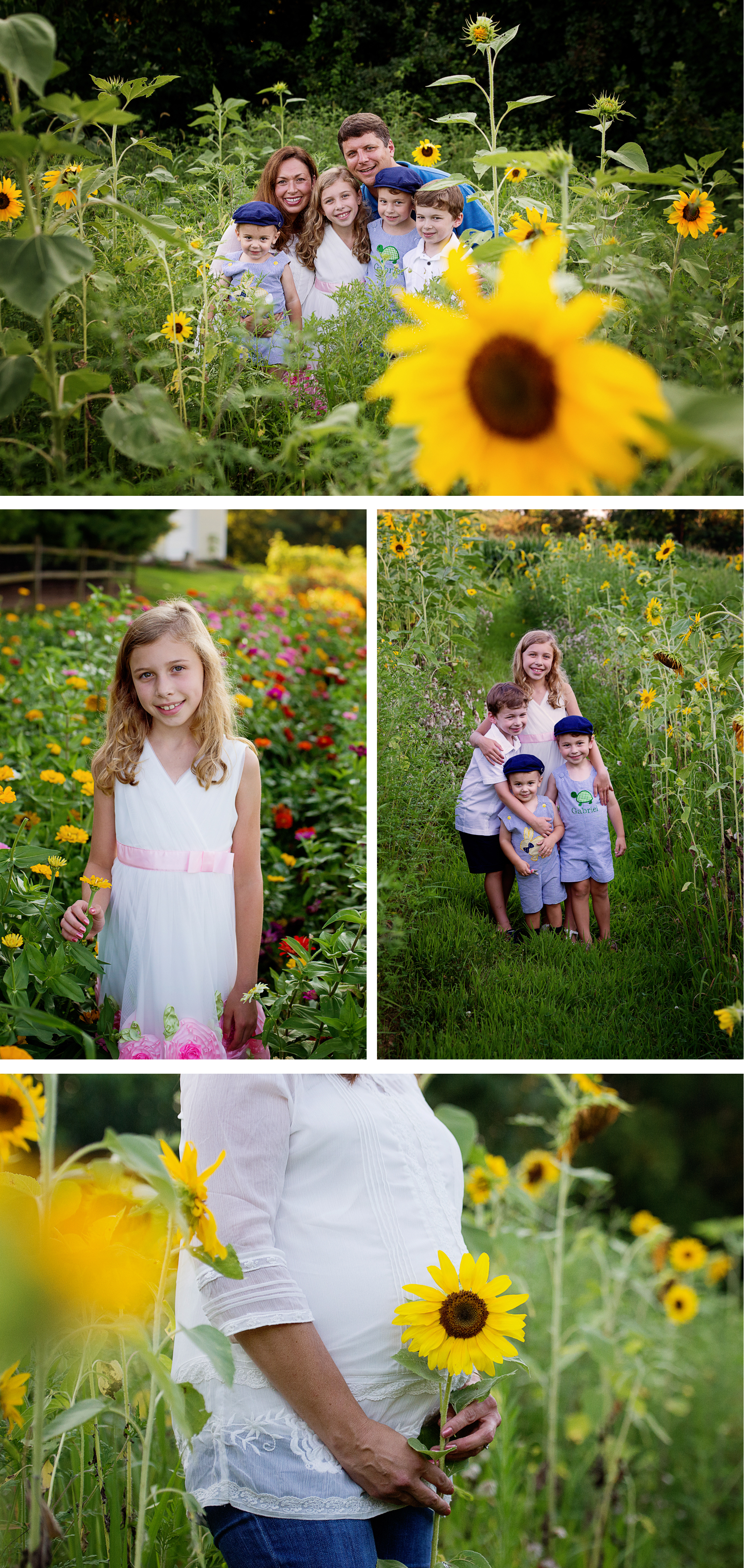 maternity photographer Frederick MD - Sunflower Garden
