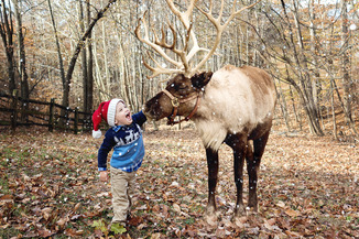 Photos with a reindeer