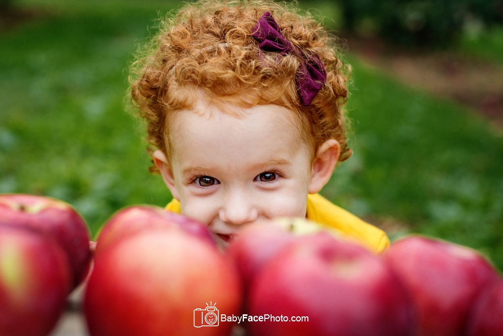 3 year old girl hiding behind apples