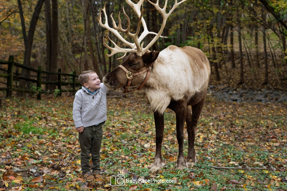 5 year old boy and reindeer